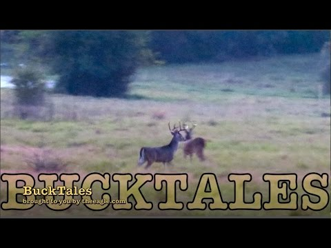 BuckTales: Bucks Everywhere!