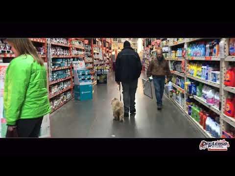 Barry Buckley  6 MO Tibetan Terrier | Best dog Training in Oregon