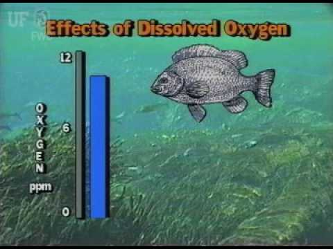 Effects Of Dissolved Oxygen On Fish