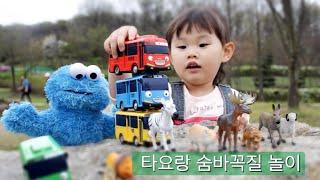 장난감 타요, 동물들과 숨바꼭질 놀이 Tayo, Animals Toys  hide-and-seek Game おもちゃ đồ chơi ของเล่น 라임튜브]