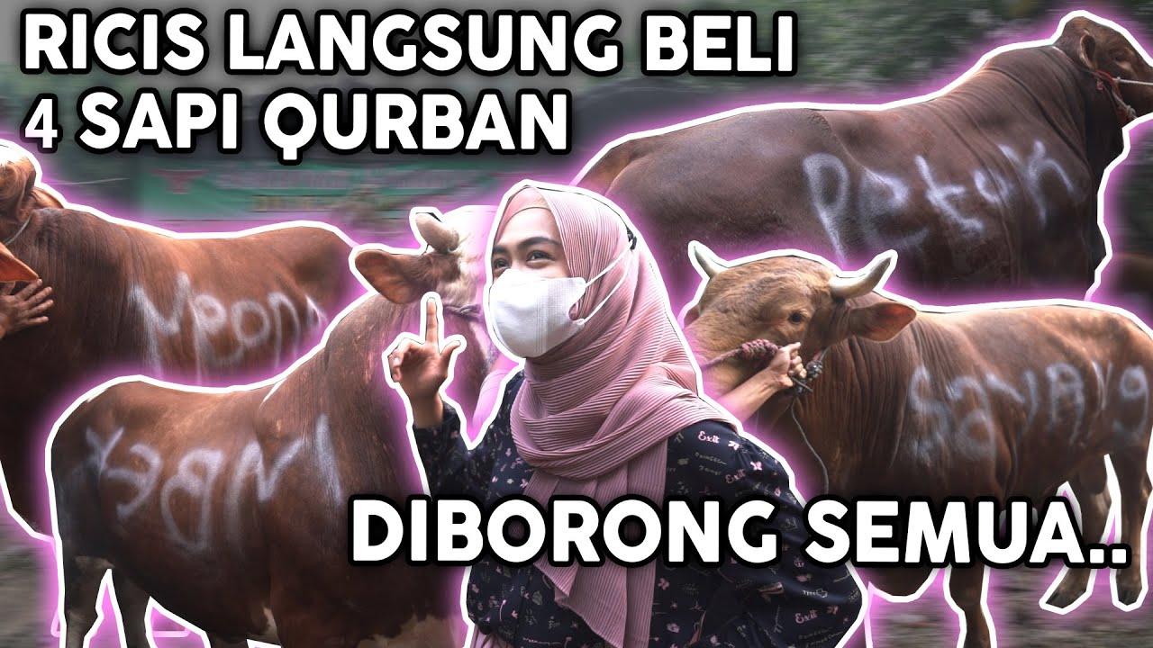 4 SAPI DIBORONG SEMUA SAMA RICIS.. Dibalik Qurban..