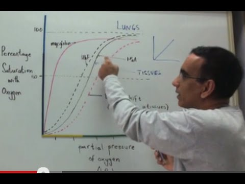 Oxygen Dissociation Curves and Transport of Oxygen and Carbon Dioxide