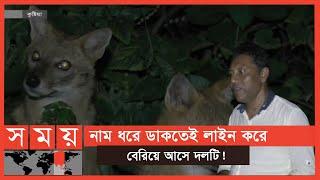 রাত বাড়তেই জড়ো হয় শেয়ালের দল, অপেক্ষায় থাকে মনিবের! | Fox | Somoy TV