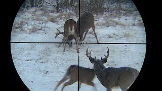 Very Aggressive Whitetail Buck Fight Through Hunting Scope Using AttachIt Smartphone Scope Mount
