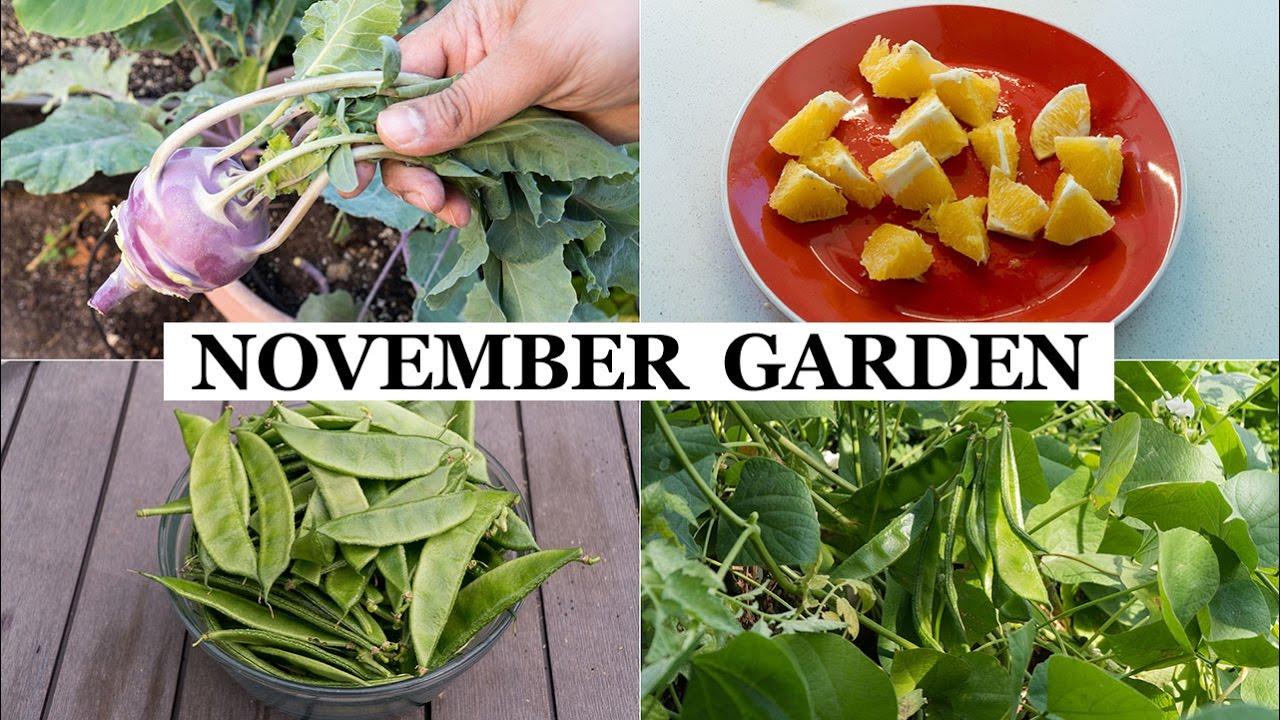 the california garden in november winter garden preparation