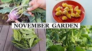 The California Garden In November - Winter Garden Preparation & Harvests