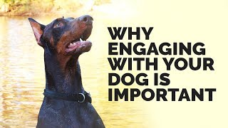 The Importance Of Engagement In Dog Training