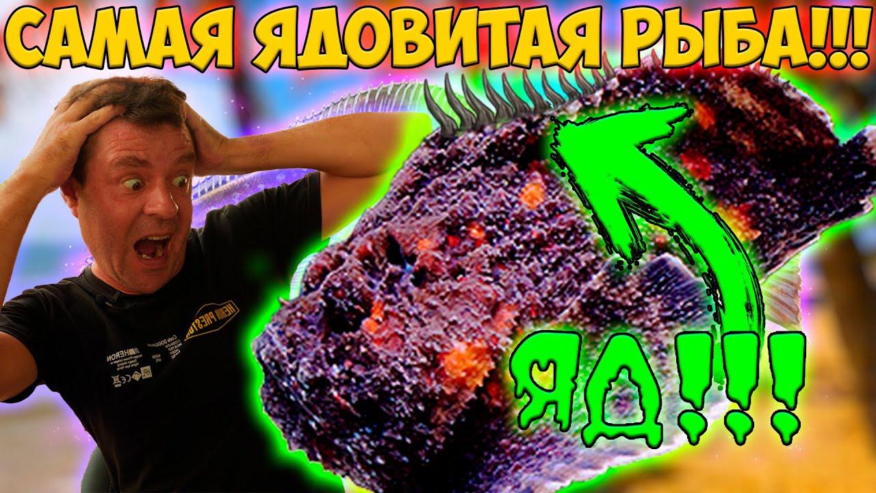 Готовим вкусную и ядовитую рыбу камень!