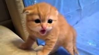 Дикий маленький котенок