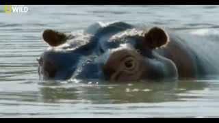 Животные-рекордсмены- Бойцы