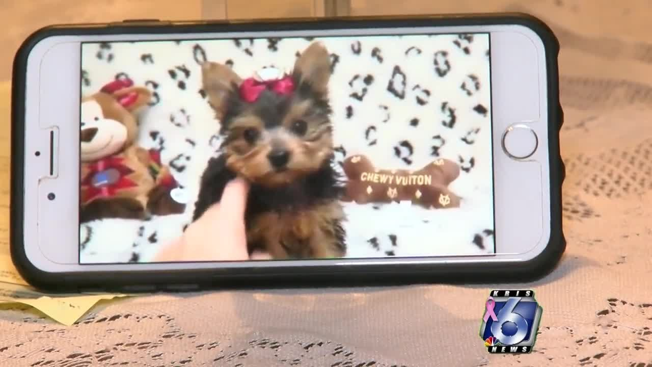 Scammers Using Puppies As Bait To Steal Your Money