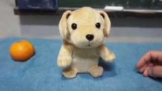 声マネをする玩具の犬と、それに無反応な犬。
