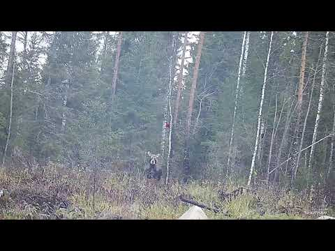 Moose Hunting  2   2020