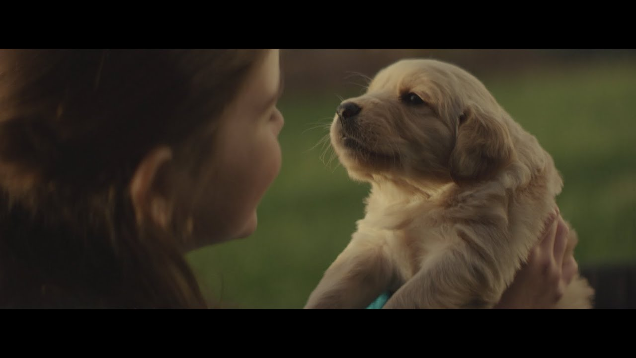 Puppy love 2 commercial