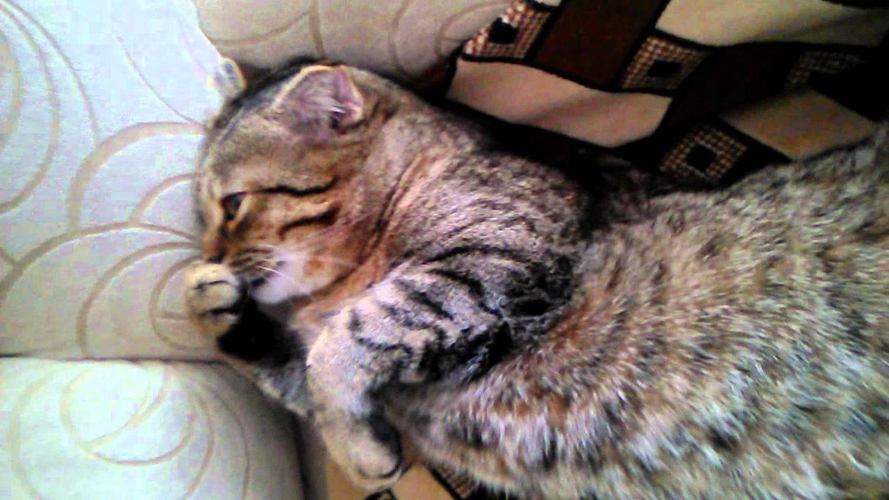 Отзывы и инструкция по применению средства кот баюн для кошек. Легко отсчитать рекомендованное производителем количество капель. Записала ее к ветеринару, а до операции он рекомендовал купить «кот баюн».