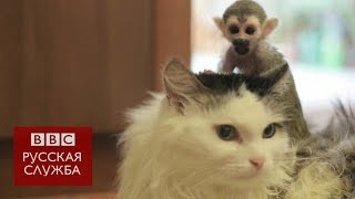 Тюменская кошка усыновила обезьяну