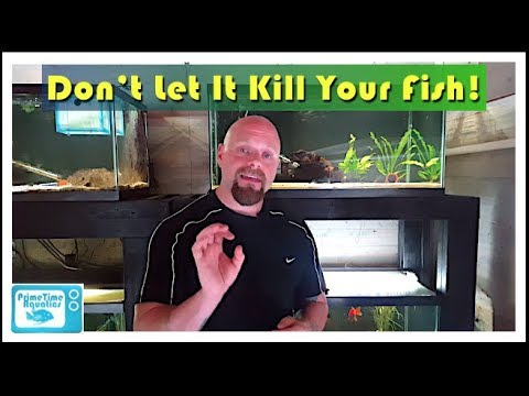 How To Lower Nitrites In An Aquarium