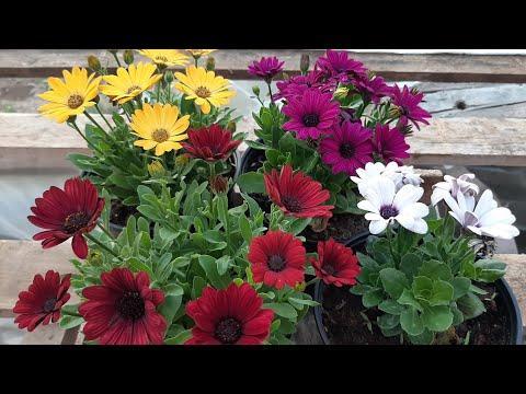 КАК ВЫСАДИТЬ ЦВЕТЫ В ОТКРЫТЫЙ ГРУНТ чтобы цвели все лето красиво
