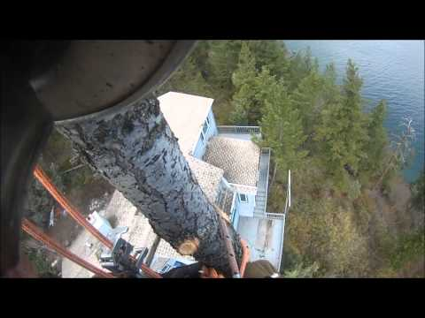 Climbing and taking down a tree with a splendid, birds eye view of Flathead Lake, Montana