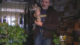 Man Trying To Save 30 Cats Before Home Foreclosure
