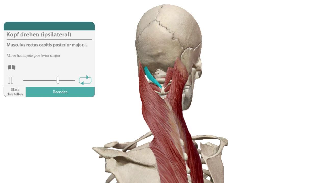 Großzügig Oberflächenanatomie Nase Bilder - Menschliche Anatomie ...