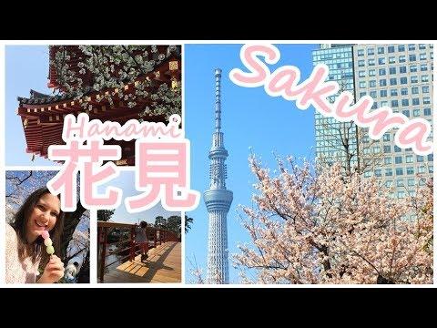 Hanami 2018 | Kirschblüten-Zeit in Japan