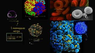 Масштаб клетки | Строение клетки | Биология (часть 1)