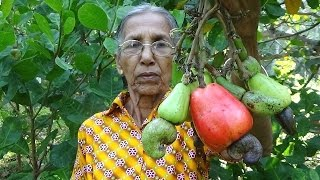 Organic Village Foods - Cooking Raw Cashew Nuts Curry in my Village by Grandma
