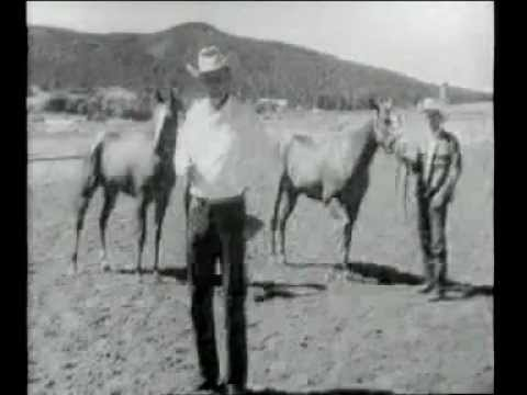 Walter Merrick Explaining The Difference Between Thoroughbred And American Quarter Horses