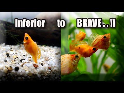Inferior Fish Become BRAVE Fish