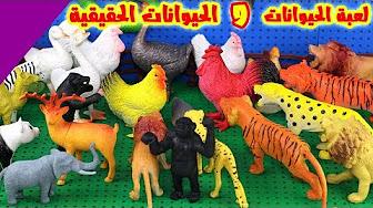 2340a9ea9b26b العاب الحيوانات الحقيقية للاطفال animal toys for children - YouTube