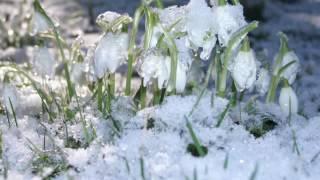 �������� ���� Der Winter ist vergangen | Winterlied Volkslied mit Text zum Mitsingen ������