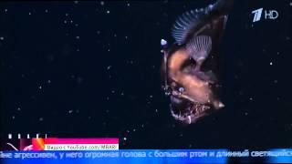 Морской черт 2014 - Редкое видео из морских глубин