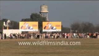 Bullock cart race at Rural Olympics