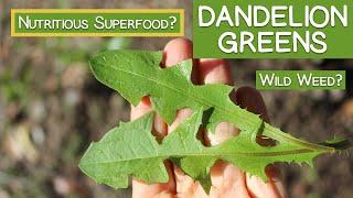 Dandelion Greens, Wild Weed or Nutritious Superfood?