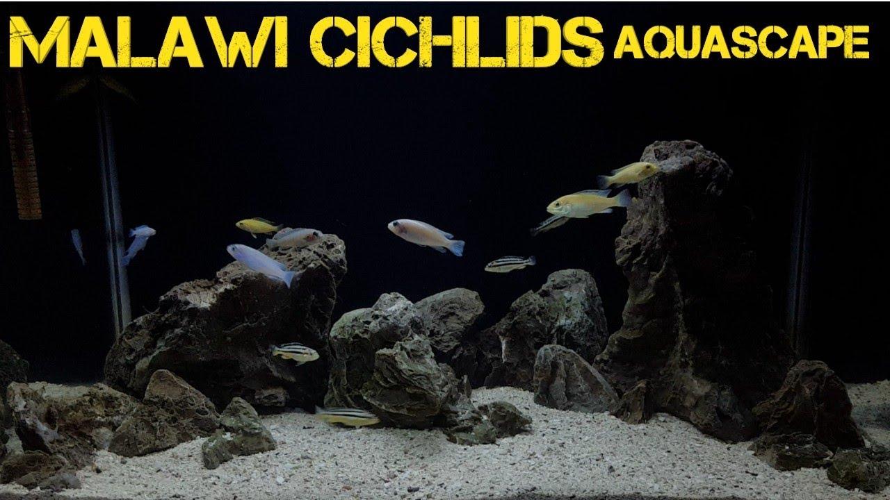 Malawi Cichlids Batu Hasil Ngambil Di Sungai Malawicichlids Aquasacape Youtube
