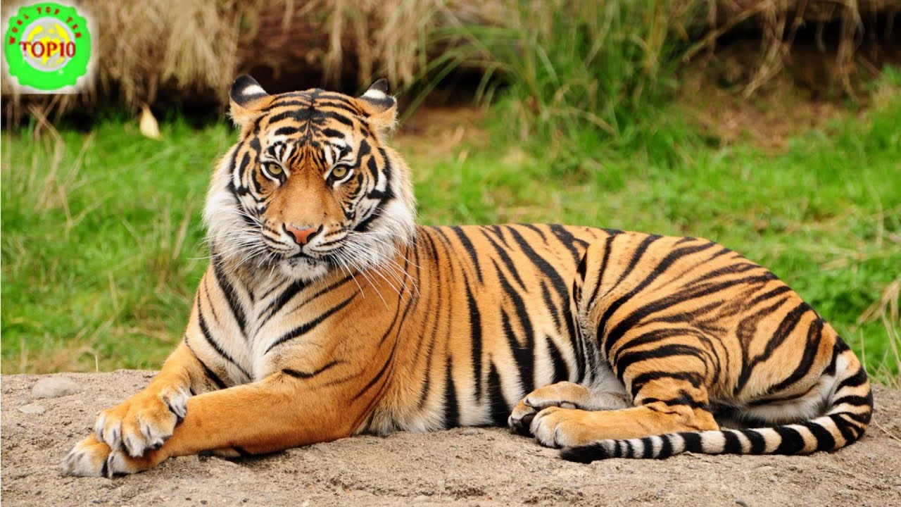 Wild Animals Lessons Tes Teach