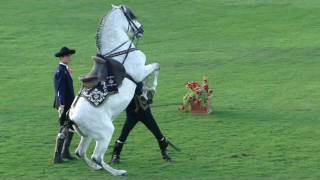 How The Andalusian Horses Dance  Show- at ADEC 10 FEB 2011.avi