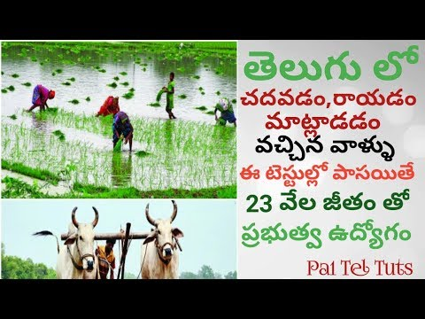 Local Jobs - Assistant Jobs for Telugu People with Good Salary | in Telugu By Pa1