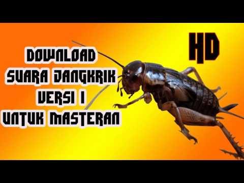 Download Suara Jangkrik Versi 1 Untuk Masteran
