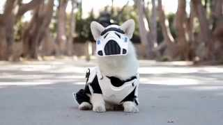 May The Fluff Be With You