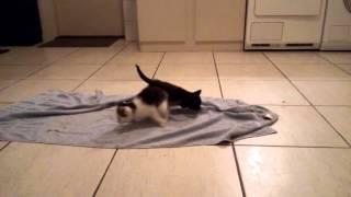 Kittens 1e keer barf.2