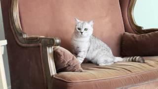 Очень много котиков, красивых и разных