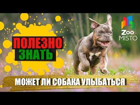 Полезно знать с ZooMISTO   Может ли собака улыбаться