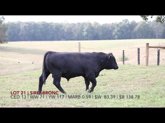 Edgewood Angus Lot 26