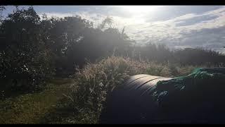 พื้นที่สวนอโวคาโด D&L ::How big is our avocado orchard // D&L Farm,Avocado Orchard