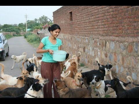 Sai ashram Animal Shelter, New Delhi -Documentary on Mudita Chandra