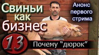 видео: ПОЧЕМУ ПЕРЕХОЖУ НА ДЮРКОВ