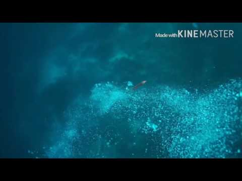 Down current, 아닐라오 베아트리체 포인트 출수과정 하강조류 영상, Scuba diving, Philippines,
