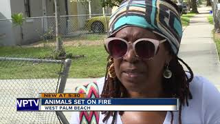 Animal Care and Control wants to know who set a pet carrier on fire with animals inside